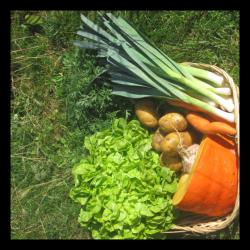 Panier de légumes de la...